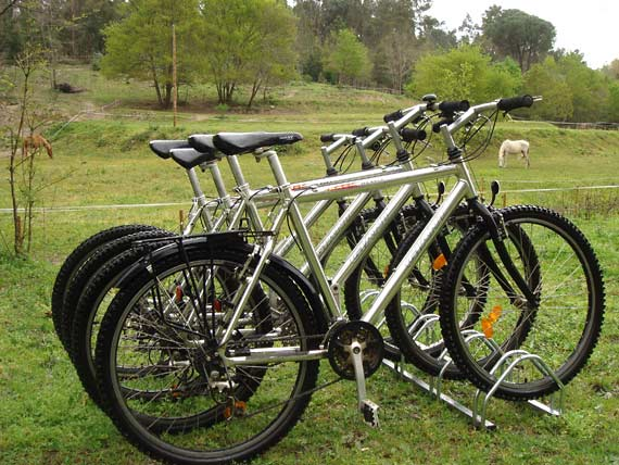 Standard bikes of the trade mark Giant