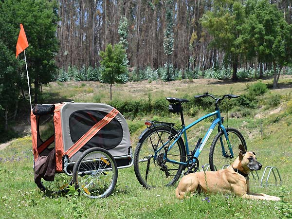 Standard bike with dog trailor